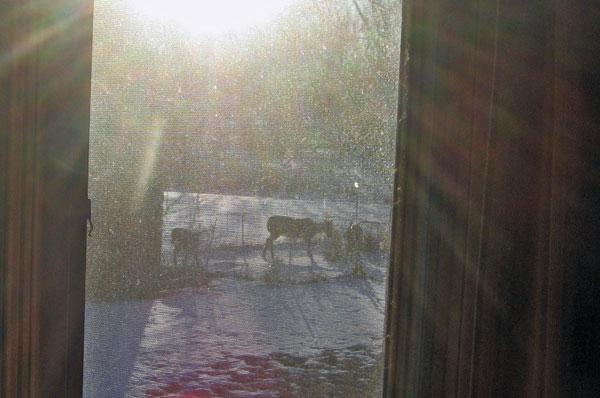 deeringarden_11101